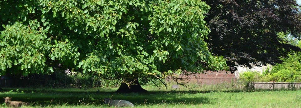Acorn Arboriculture & Forestry, tree surgeons based in Chelmsford, Essex