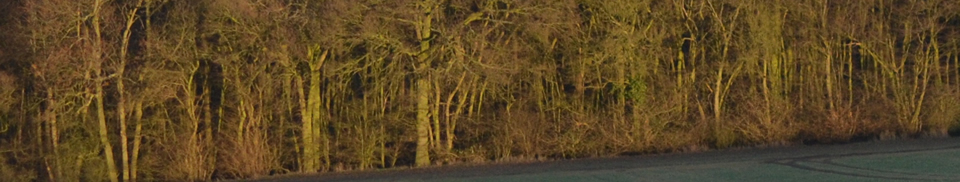 Acorn Arboriculture and Forestry Consultancy Services