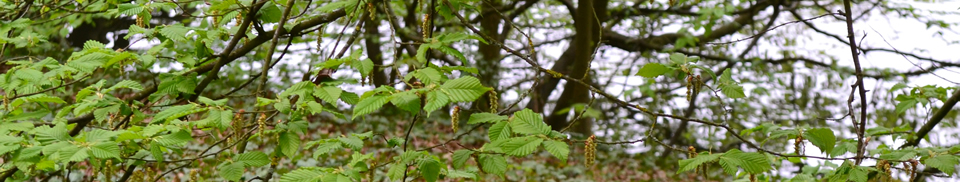Contact Acorn Arboriculture and Forestry